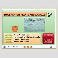Biology M3 Movement In Plants And Animals