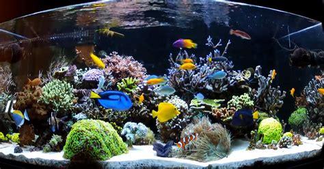 types  saltwater aquariums  aquarium setup