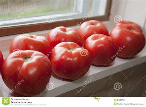 Windowsill Tomatoes by Fresh Tomatoes On Windowsill Stock Photo Image 24902780