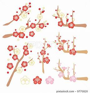 japanese apricot flower, an ume flower, vector - Stock ...