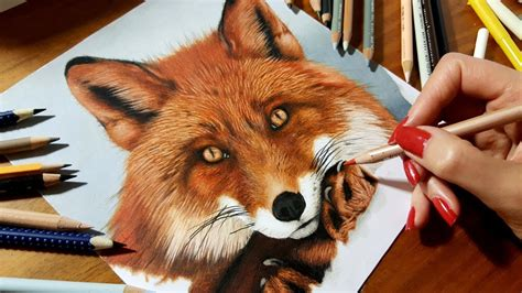 speed drawing   red fox colored pencil artwork