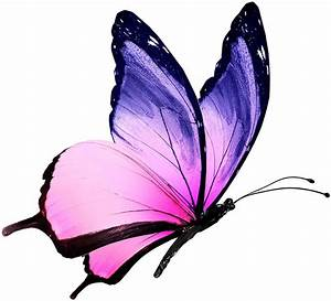 17 Best images about Butterfly on Pinterest | Wallpapers ...