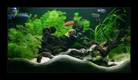 decoration d aquarium d eau douce am 233 nagement d 233 coration interieur d aquarium