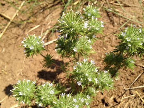 smells  cannabis  plants forum  permies