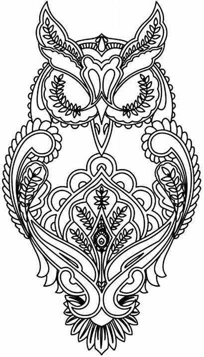 Coloring Pages Adults Animal Owl Animals Adult