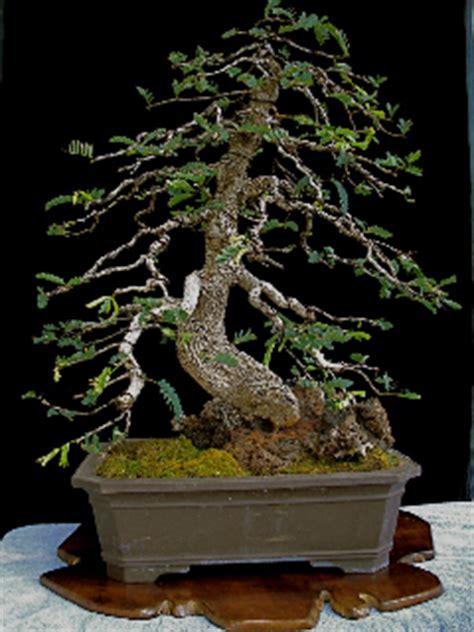 bunch  random bonsai pix