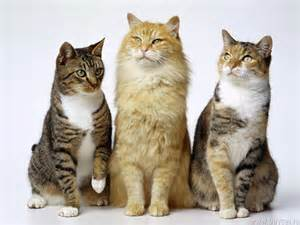 what of cats does cats images cats hd wallpaper and background photos