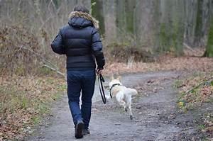 Welche Pflanzen Sind Für Hunde Giftig : mein hund hat eine schilddr sen berfunktion was ist das ~ Watch28wear.com Haus und Dekorationen