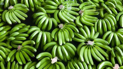 Ngrënia e bananeve para se të piqen vjen me përfitime ...