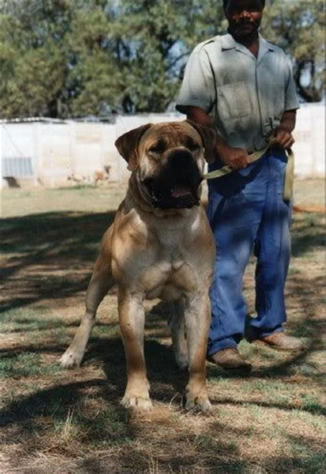 images  dogs  pinterest pit bull dog houses  farm dogs