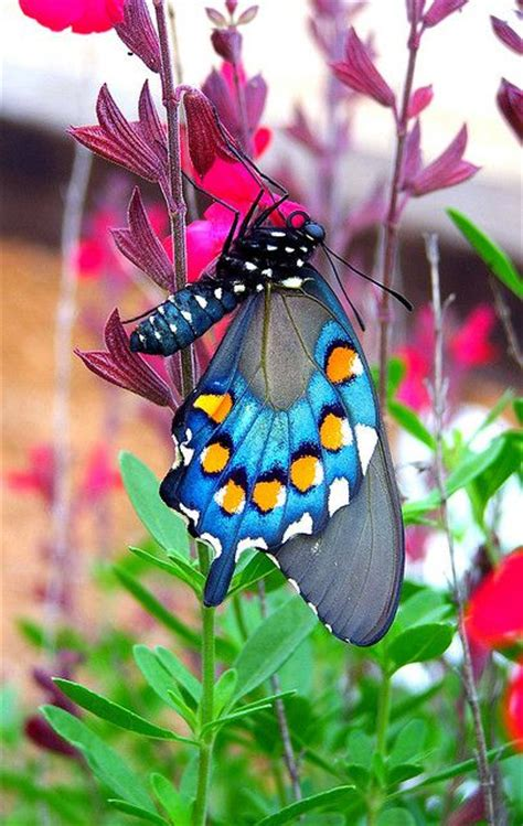 turquoise cabinets kitchen les 93 meilleures images du tableau butterfly45 sur 2966