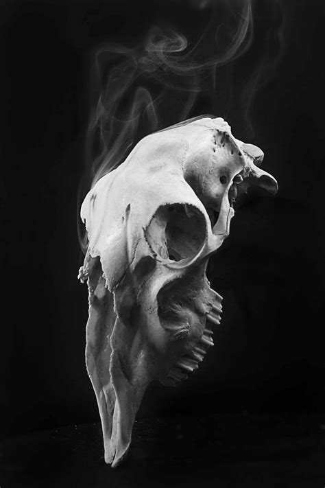 smokey sheep skull  knapb  deviantart