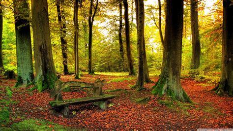 Beautiful Forest, Autumn 4k Hd Desktop Wallpaper For 4k