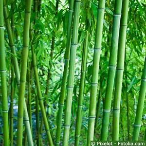 Bambus Im Garten : bambus gartenbambus ~ Markanthonyermac.com Haus und Dekorationen