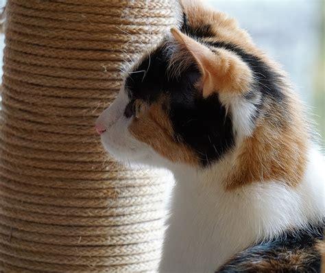 3 diy pour bien accueillir votre nouveau chaton 224 la maison astuce bricolage