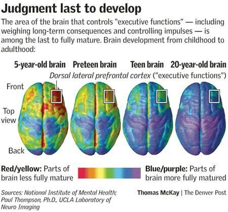 judgement   develop brain development executive