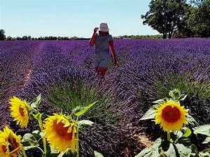 Villa Lavanda, Trans en Provence, asiakasarvioita Booking