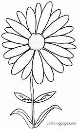 Daisy Coloring Printable Dibujos Bunga Margarita Imprimir Colorear Margaritas Daisies Gambar Tk Anak Drawing Mewarnai Untuk Bouquet Flores Flowers Pdf sketch template
