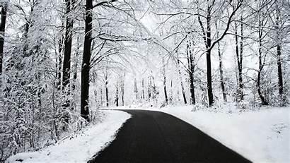 Snowy Forest Desktop Wallpapers