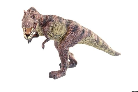 Plastic Dinosaurs Stolen From Lawn In Front Of Maryland's