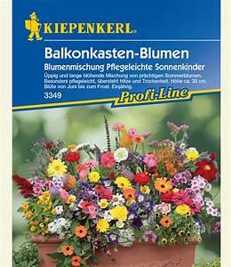 Künstliche Blumen Für Balkonkästen : balkonkasten blumenmix 39 pflegeleich wiesenblumensamen ~ A.2002-acura-tl-radio.info Haus und Dekorationen