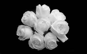 Black And White Rose Wallpaper 5 Hd Wallpaper ...