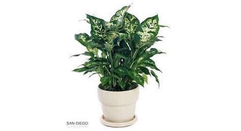 quelle plante pour une chambre plantes pour la chambre plantes dépolluantes