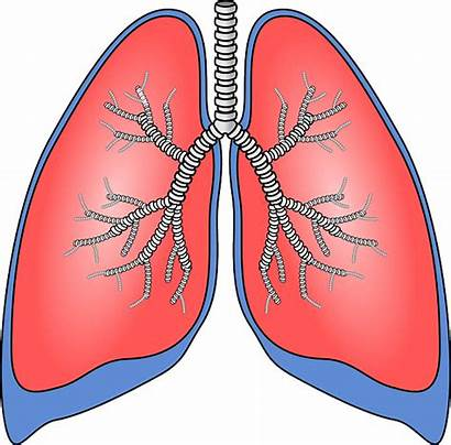 Lungs Lung Damaged Clipart Disease Chronic Pulmonary