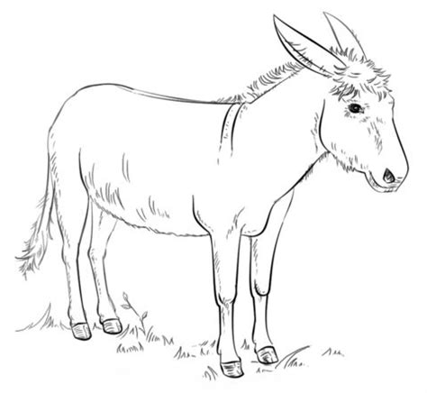 Image result for balaam and the talking donkey coloring pages ... | 436x474