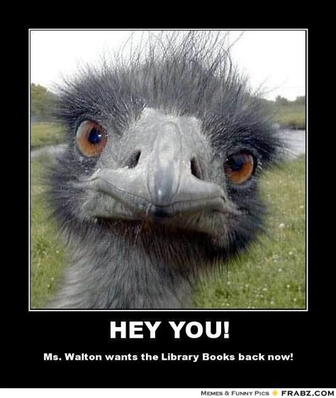 Ostrich Meme - hey you ostrich meme generator posterizer