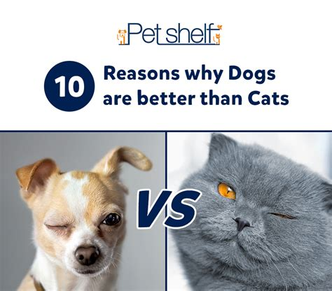 cats dogs better than why pets reasons essay pet vs