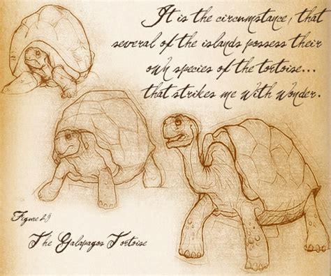 images  tortoise  pinterest giant tortoise