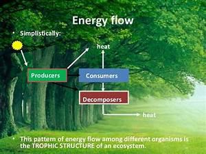 Vivek Ecosystem H2 O  Carbon Cycle  U0026 Energy Flow