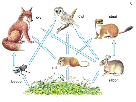 cuisine web powerpoint food webs carbon cycle