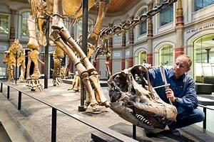 Reiseführer Für Berlin : working at the museum f r naturkunde naturkundemuseum berlin ~ Jslefanu.com Haus und Dekorationen