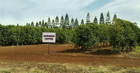 Hawaii photography   haleiwa coffee plantation by douglas page. 10 Amazing Hawaiian Experiences   TrekAmerica
