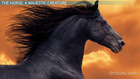horse habitat facts lesson  kids video lesson