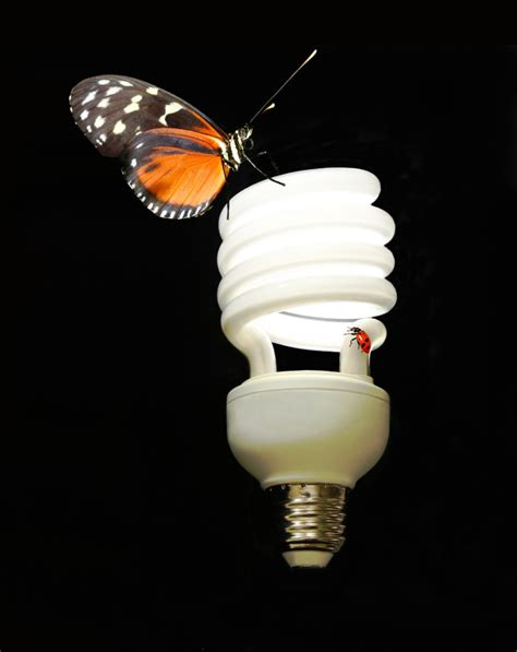 why are bugs attracted to light why are bugs attracted to light wonderopolis