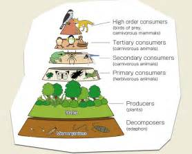 Why It Is Biodiversity Important