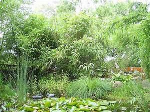 Bambus Vernichten Tipps : pflanzen um den teich der generalverj ngte teich gartenteich goldfische biotopfische koi ~ Whattoseeinmadrid.com Haus und Dekorationen