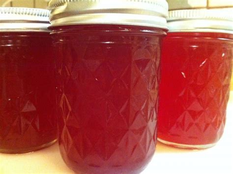 prickly pear jelly 17 best images about canning recipes on pinterest home canning root cellar and jars