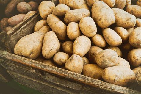 dickmacherin kartoffel naehrstoffe und vitamine