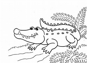 hd wallpapers baby alligator coloring page