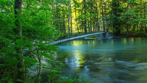 壁紙 川、森、橋、夏、自然の風景 2560x1600 Hd 無料の