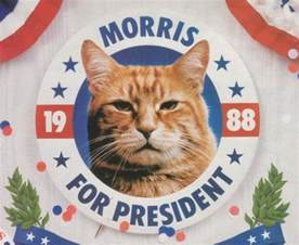 morris the cat morris the cat feline presidential candidate meow