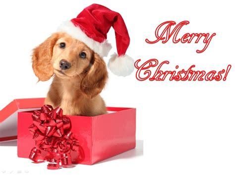 ccute animals merry christmas
