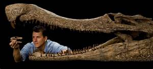 new crocodile fossils discovered