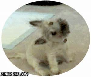 Dog Wtf GIF by Cheezburger - Find & Share on GIPHY