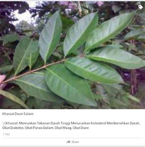 tanaman obat khasiatnya hidroponik ceria