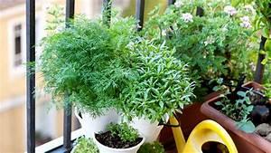 Jardin Et Balcon : un jardin sur votre balcon ~ Premium-room.com Idées de Décoration